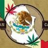 Medical Marijuana Help!